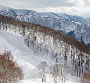 nozawa onsen mountain